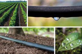 Bewässerungssystem – alles für den Garten
