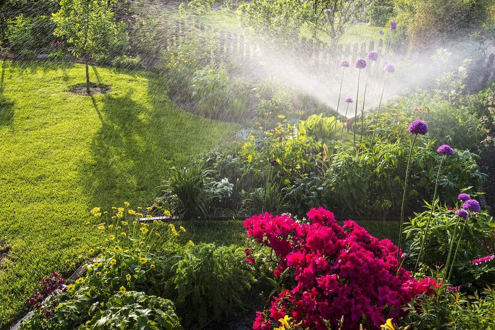 Gartenbewässerung – wie schütze ich die Umwelt und meinen Geldbeutel