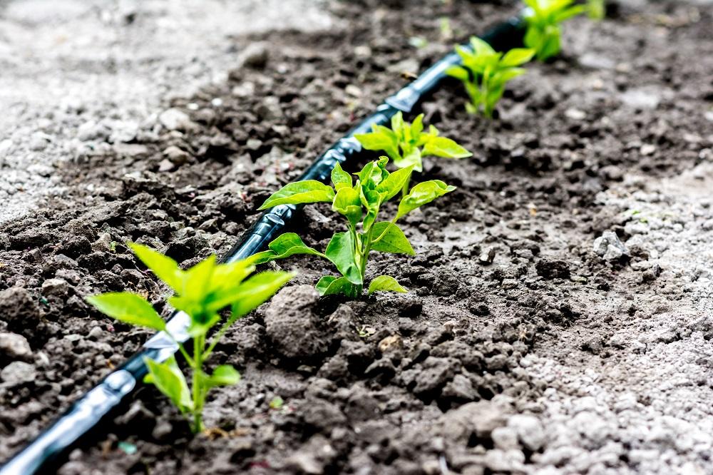 Regenwasseransammlung – zero waste Prinzip