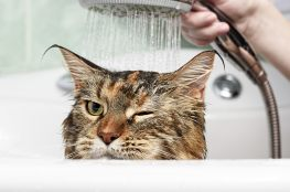duschdichtungen