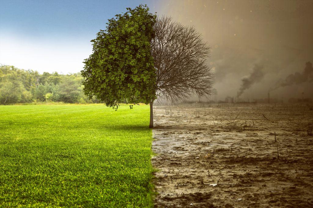 umweltschutz-baum