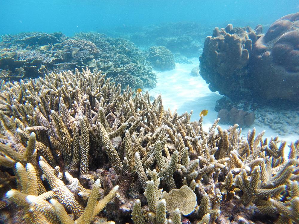 aussterben-des-korallenriffs