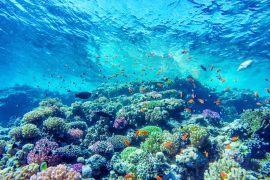 Zwei Seiten eines Korallenriffs – Pantone gibt wieder Trends an