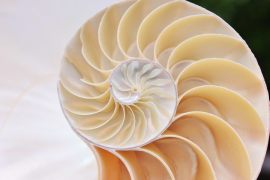 Warum unser Gehirn rechte Winkel und Symmetrie bevorzugt?