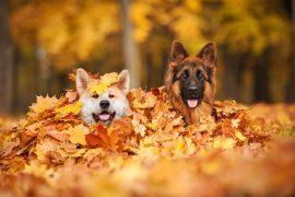 Hund – der beste Freund auf 4 Pfoten