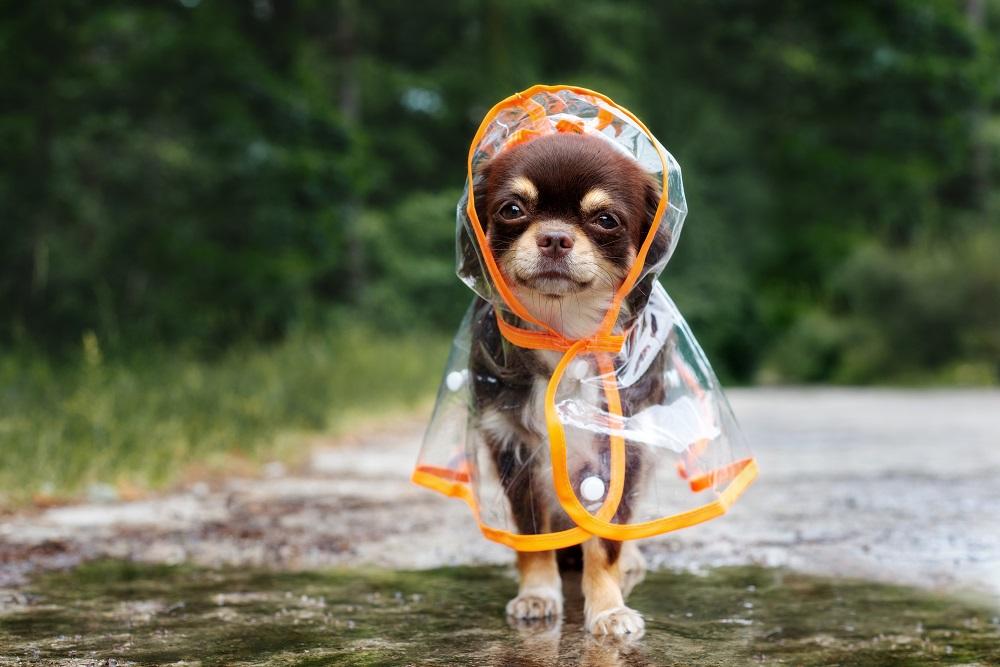 hund-im-regenmantel