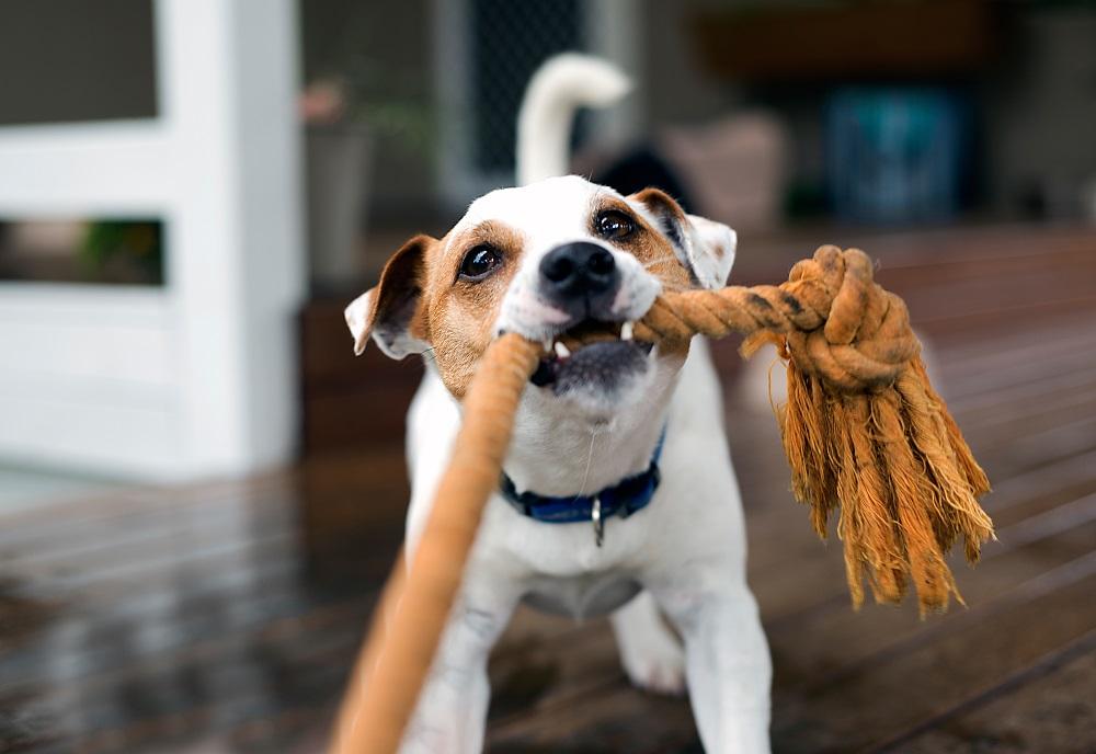 hundespielzeug-hund