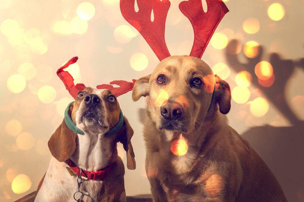 hunde-weihnachten-rentierhoerner