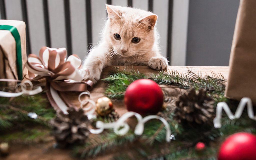 katze-weihnachten-deko
