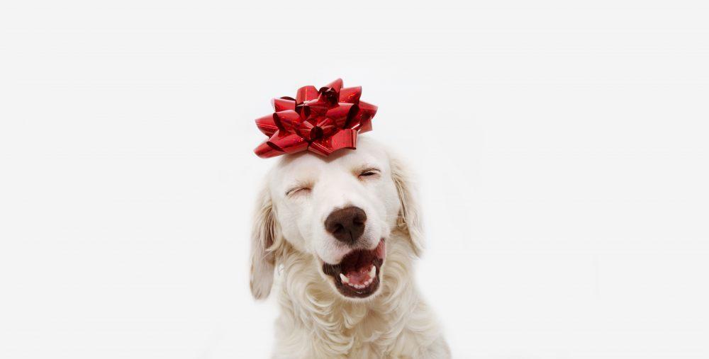 weihnachten-hund