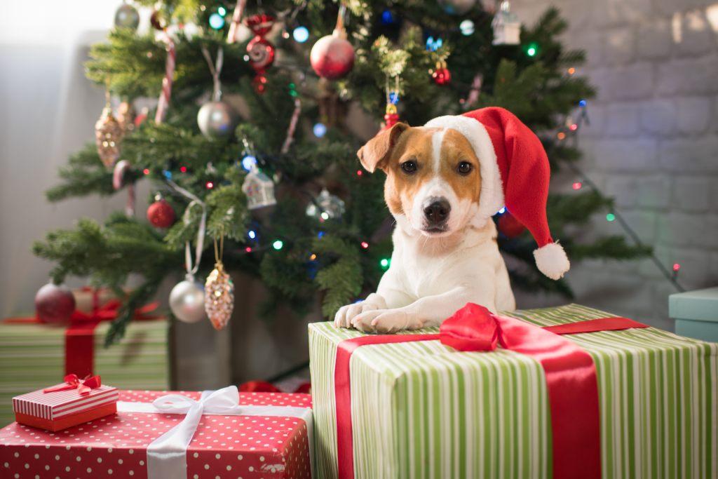 weihnachtsgeschenk-hund