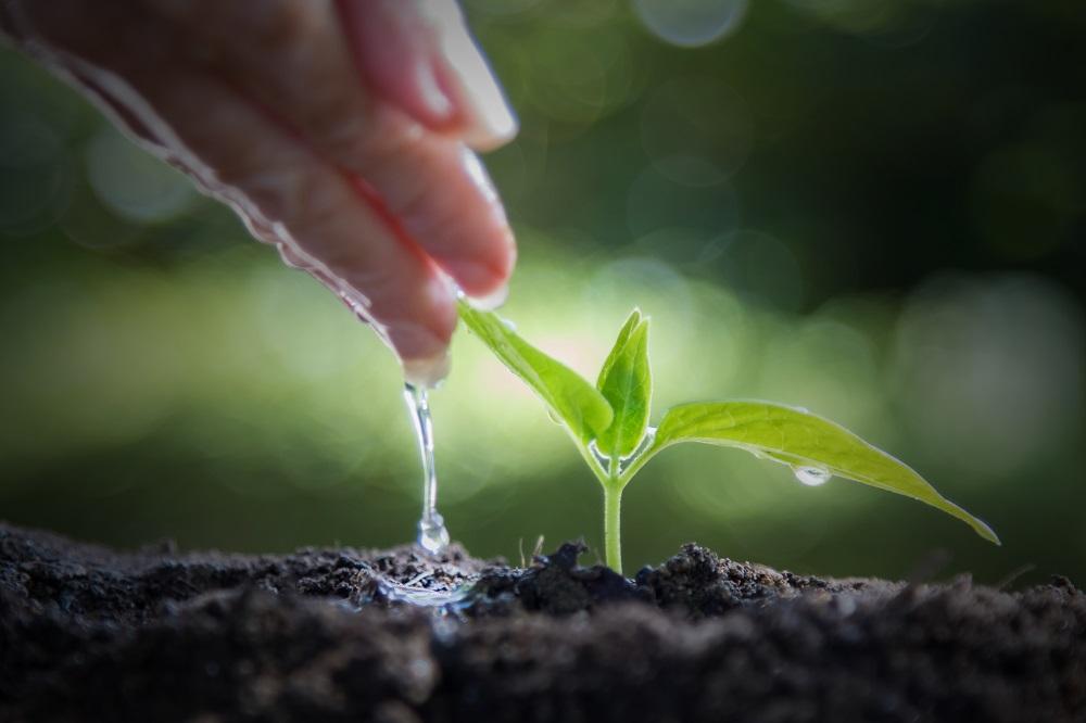 bewässerungssystem-pflanzen