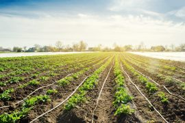 Das Bewässerungssystem von A bis Z – effektives Gießen eines großen Gartens
