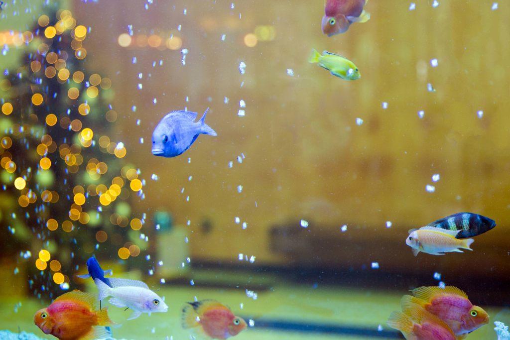 weihnachtsbaum-aquarium-reichtum