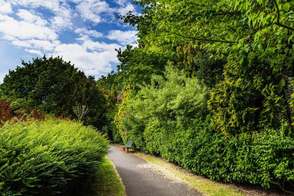 saftiges-grun-natur-im-mai