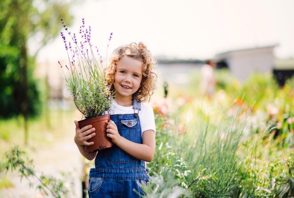 lavendel-anpflanzen-hilft-gegen-stechmucken