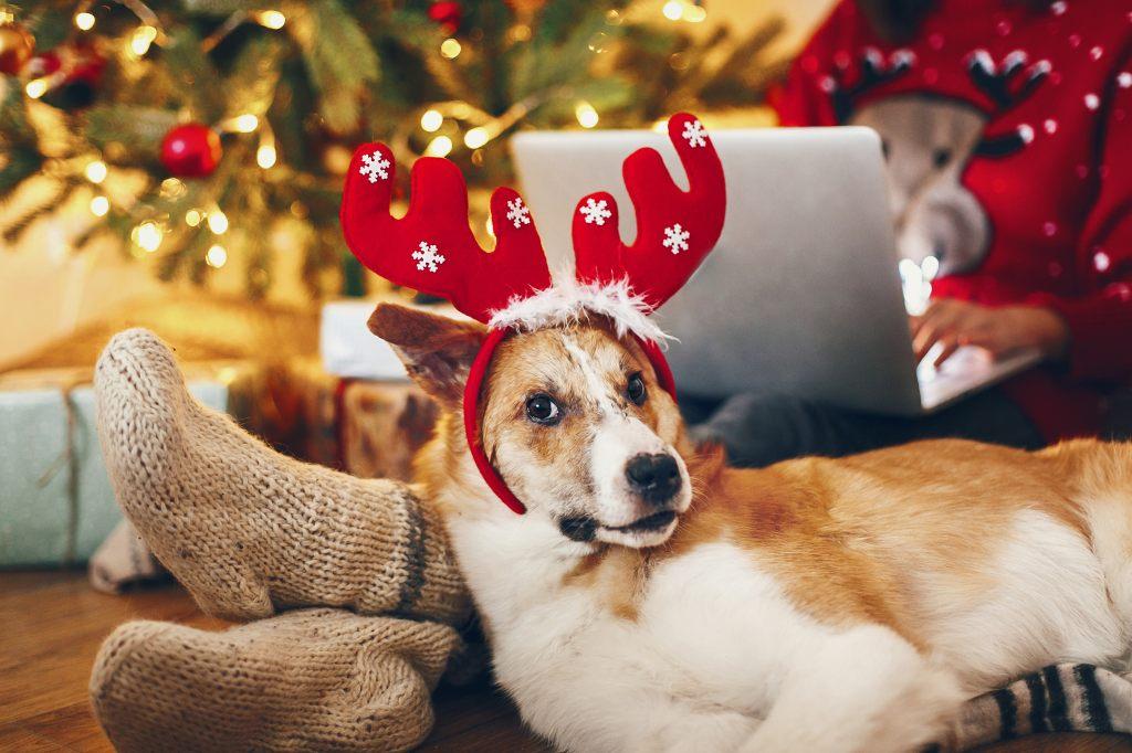 hund-unter-dem-weihnachtsbaum-mit-weihnachtsschmuck