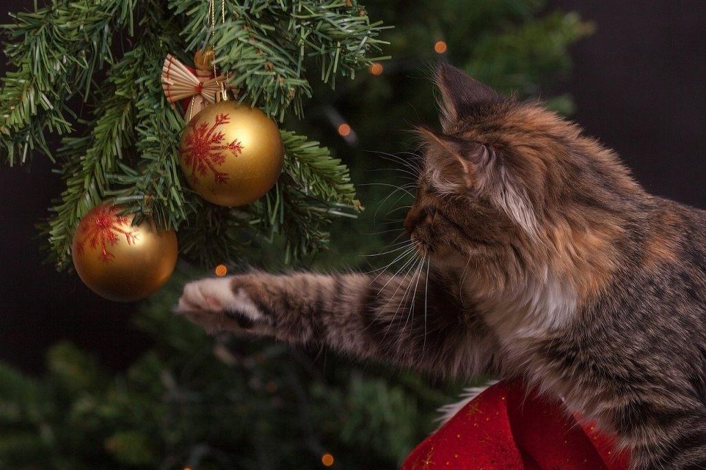 katze-und-weihnachtsschmuck