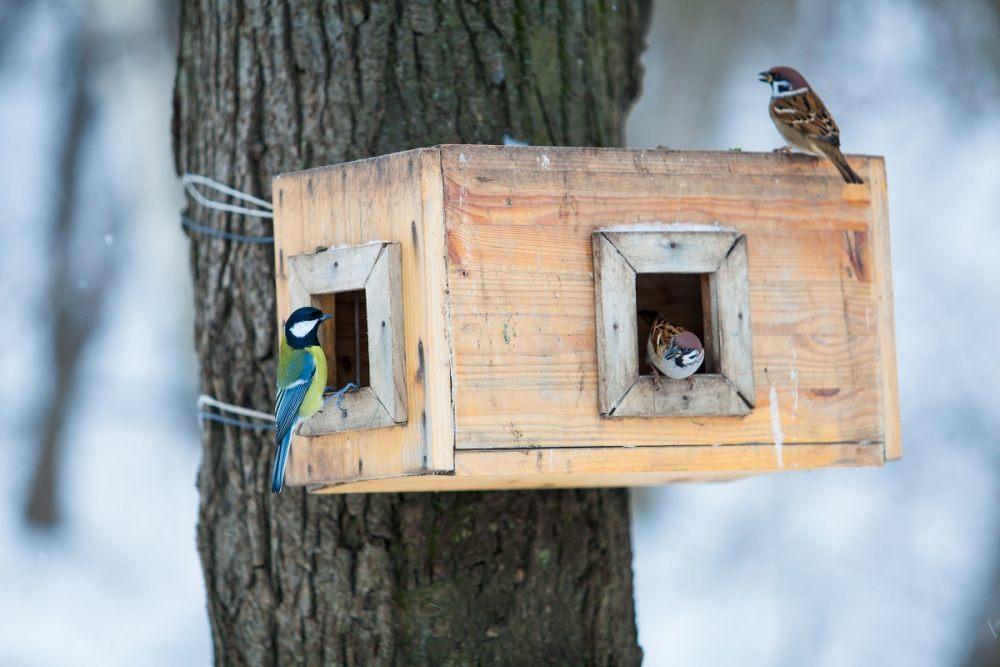 kleine-voegel-im-vogelhaus
