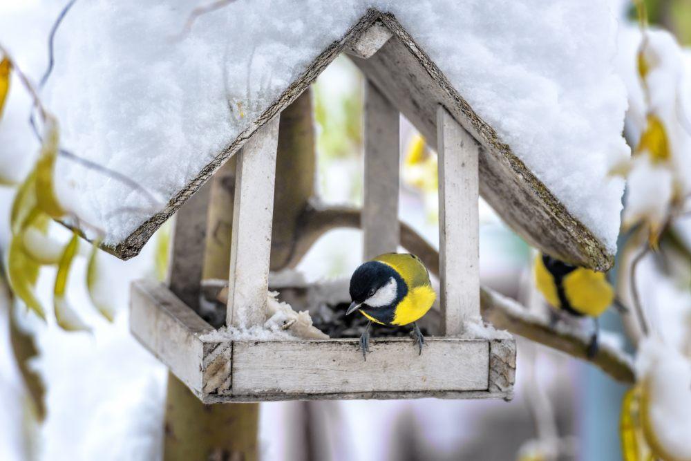 meise-im-vogelhaus