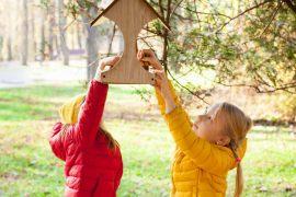 Vogelhaus bauen – 7 bewährte Ideen kurzgefasst
