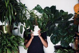 Zimmerpflanzen – Tipps und Tricks, wie man Zuhause eine grüne Oase schafft