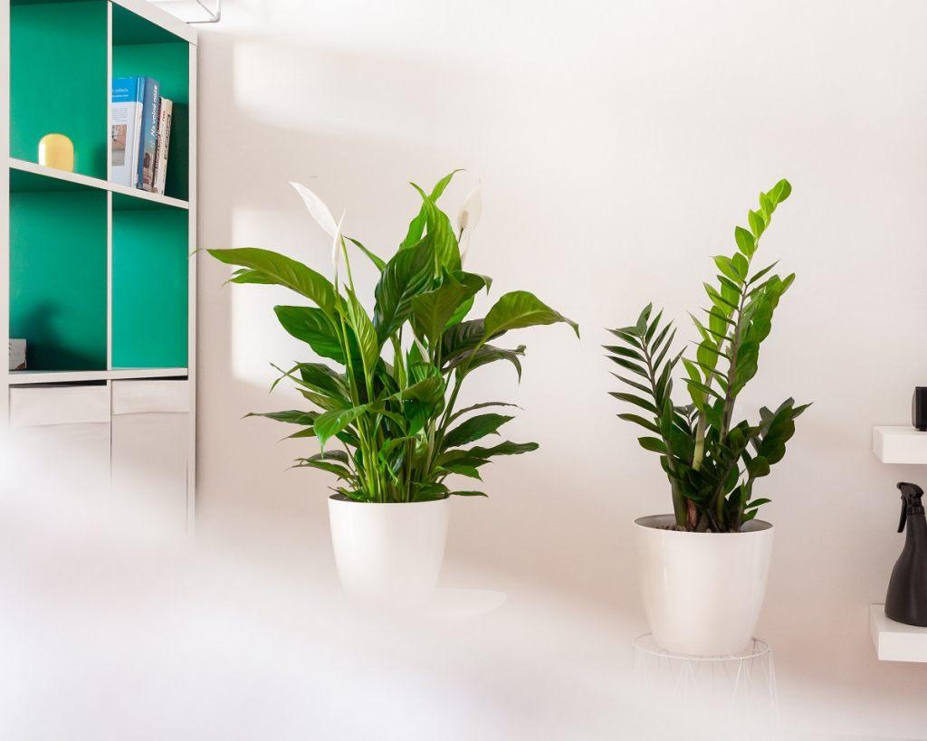 zimmerpflanzen-fur-das-bad