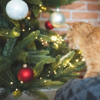 Vorschau: 10m LED Lichterkette für Weihnachtsbaum LEDs 500 Weihnachtsbaumbeleuchtung